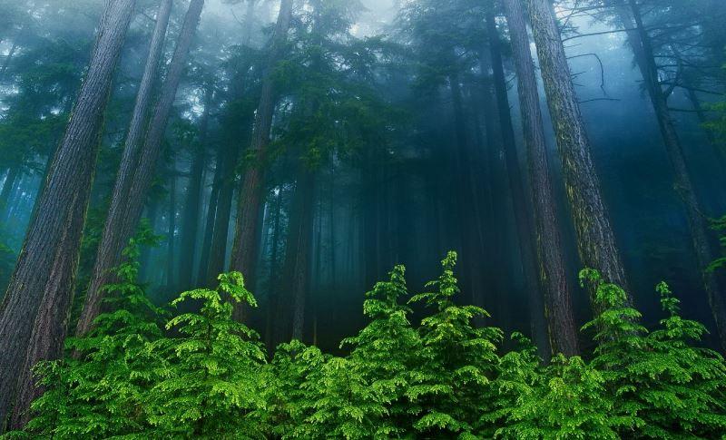 natureza 062
