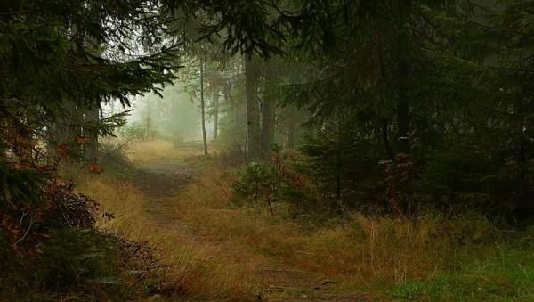 natureza 016