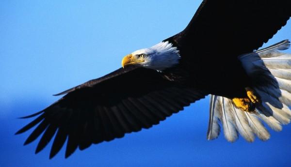 14-aguia