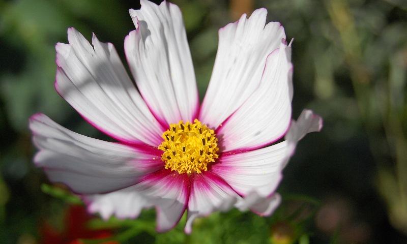 06-flor