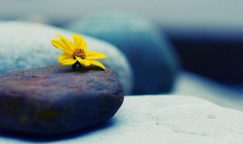 20-flor na pedra