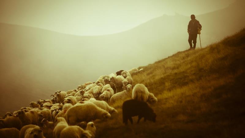 27-pastor_ovelhas