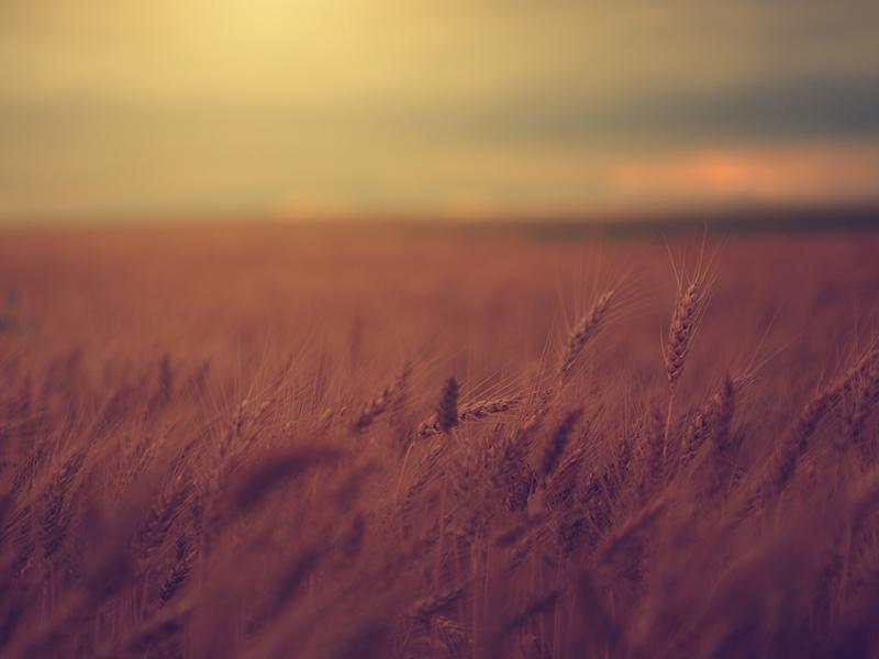 24-paisagem