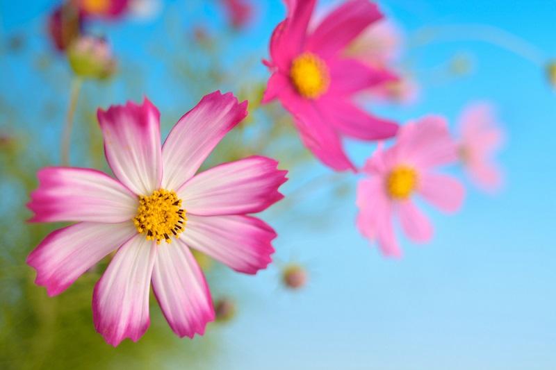 18-flores
