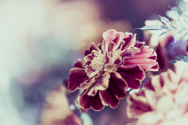 02-flores